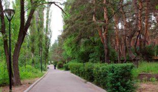Аллея-дорожка в парке Дельфин