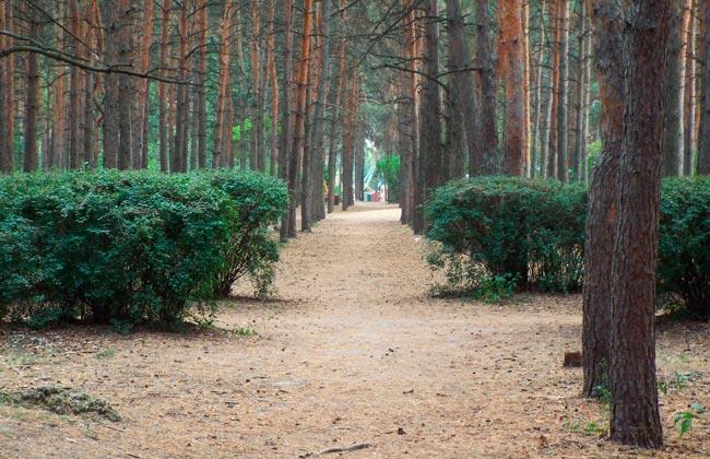 Сосновый парк Танаис в Воронеже