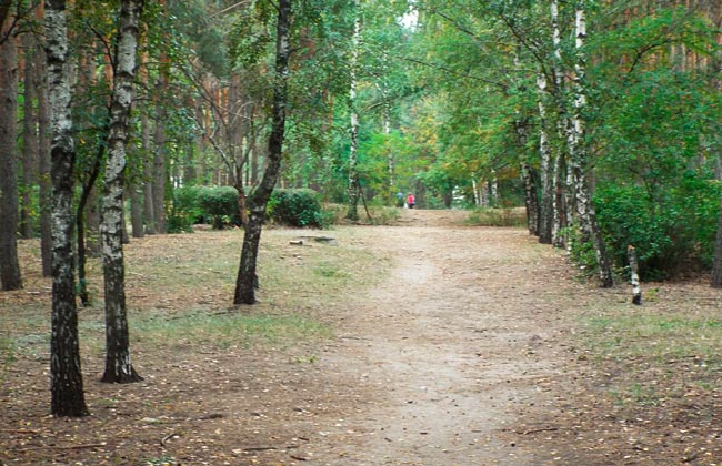 Парк Танаис: березовая аллея