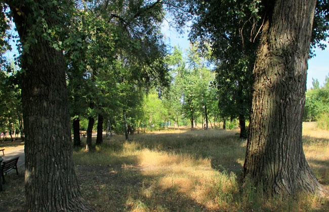Южный парк Воронеж, фото