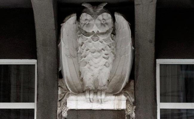 Дом с совой в Воронеже: фото совы