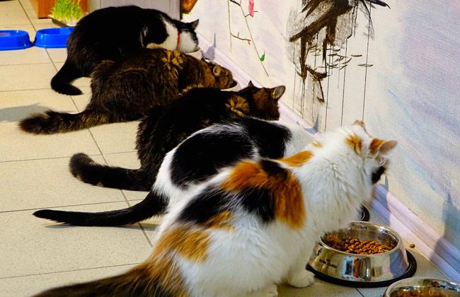 Кошачий обед в воронежском котокафе Мистер Мур