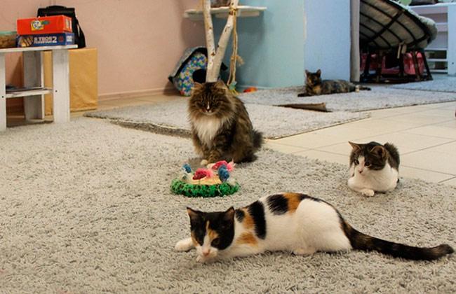 Кошки в котокафе Mr.Moore (Воронеж)